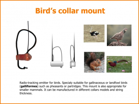 Bird radio transmitter mount